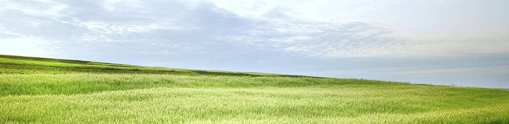 slider-grass